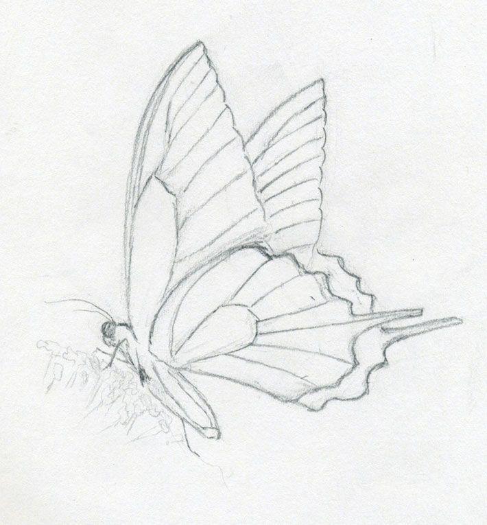 Schmetterlinge Zeichnungen