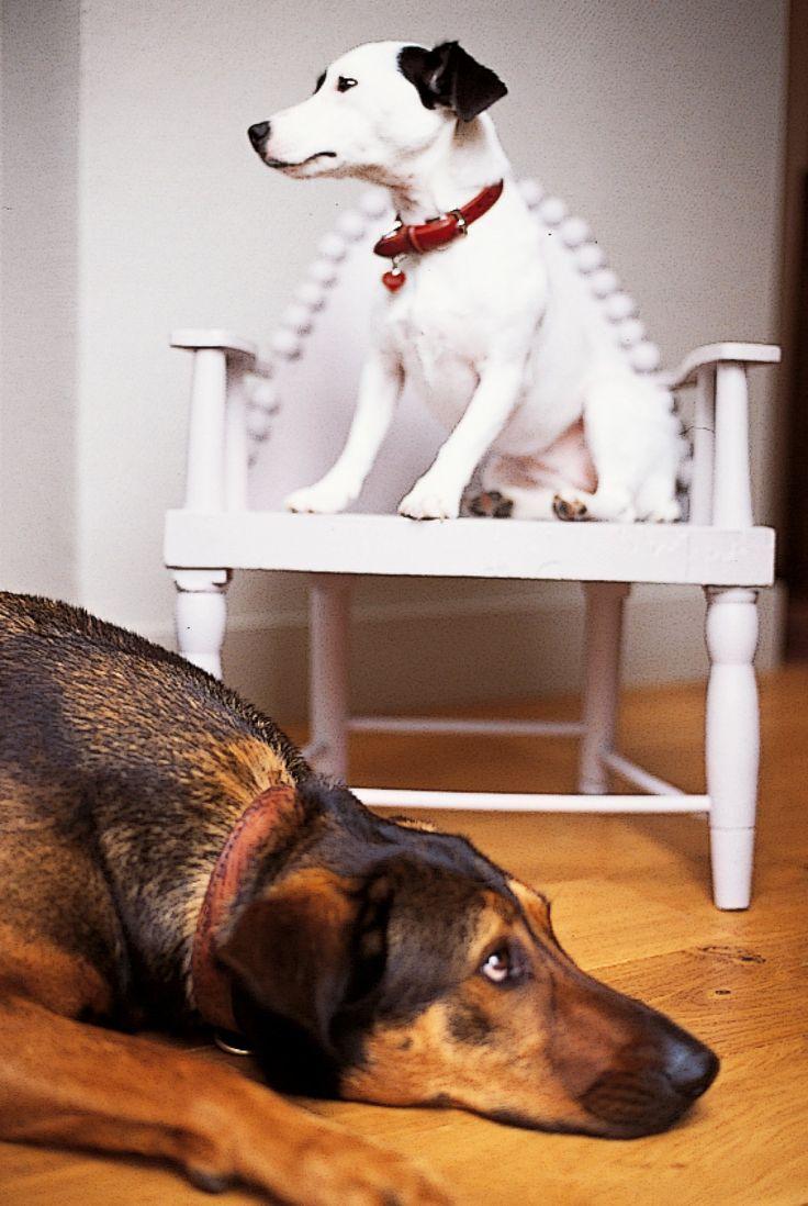 Une chaise pour chien