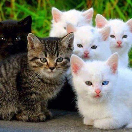 Hey Little Kitty, Kit, Kitties!