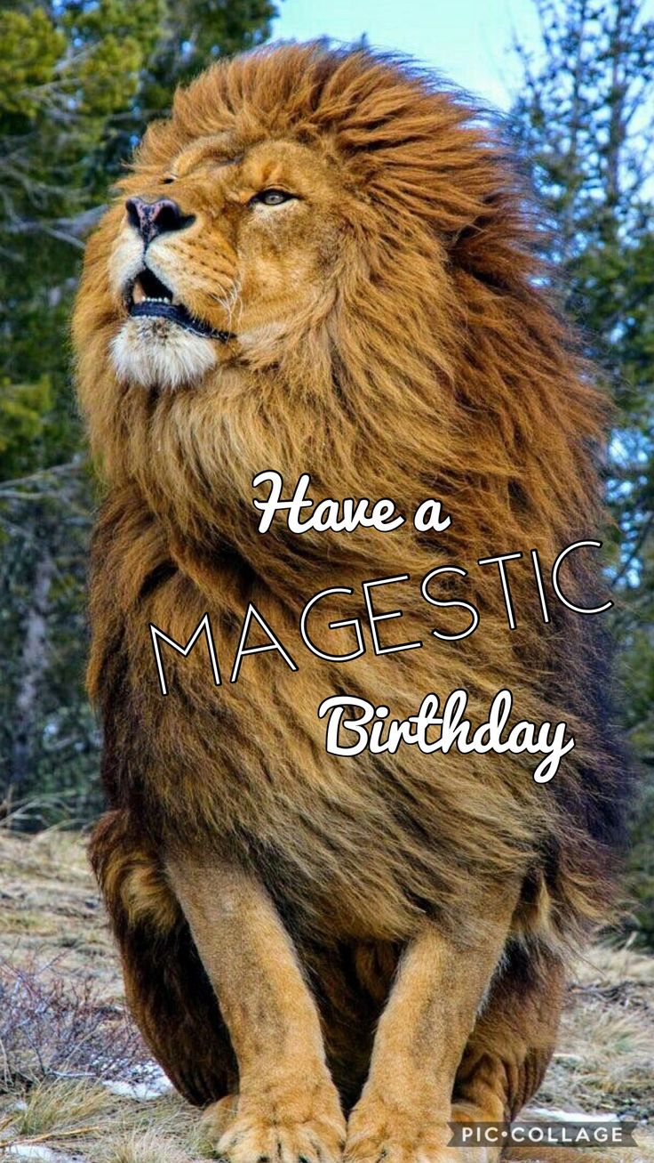1257 best happy birthday images on pinterest birthdays happy have a majestic birthday huge lion kristyandbryce Choice Image