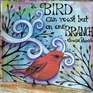 Bird a Week #1 | Flickr - Photo Sharing!