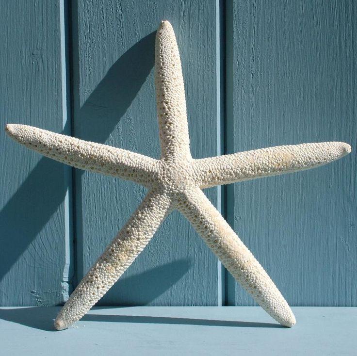 Finger Starfish   CoastalHome.co.uk: Bathroom