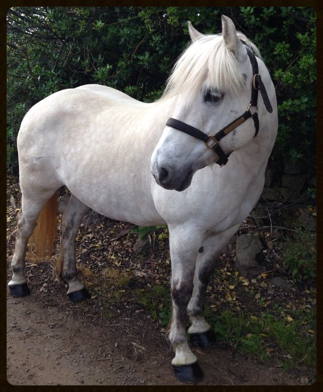 52 best images about Highland ponys on Pinterest | Photo ...