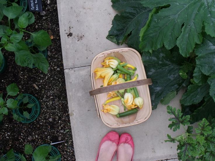 vegetable garden planner growing guide