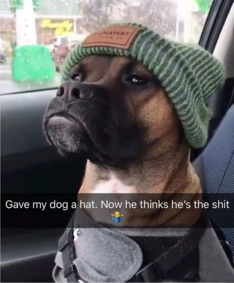 This dog looks like Kevin Hart.