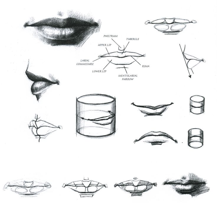 22 best Anatomy Mouth images on Pinterest | Drawing tutorials ...