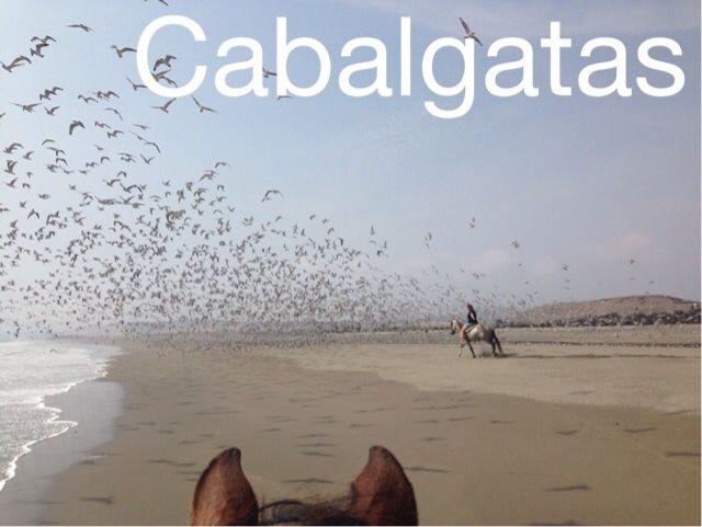Aves marinas en la playa San Pedro de Lurin - Lima - Perú