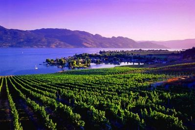 Okanagan Valley Vineyards