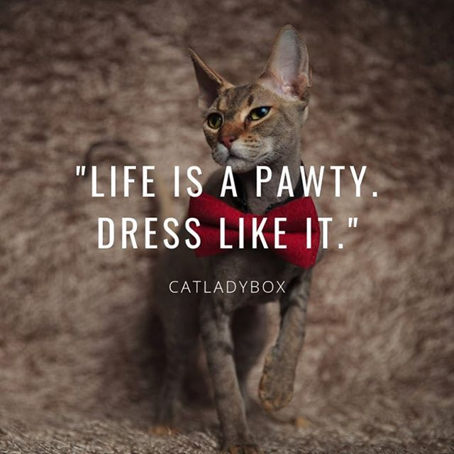 Always Dress To Impurress Instagram Cat Lady