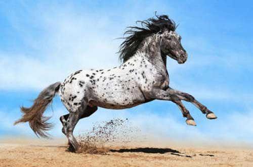Черные и белые лошади
