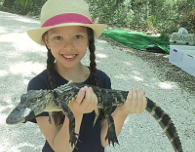 10 Fun Things to Do on Hilton Head Island with Kids: Hold a baby alligator.