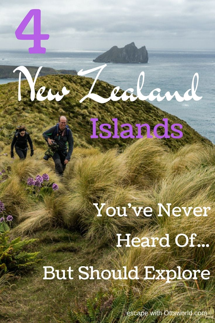 4 New Zealand Islands You've Never Heard Of But Should Explore If you want the complete Kiwi experience, then don't leave out these 4 New Zealand Islands via @Ottsworld