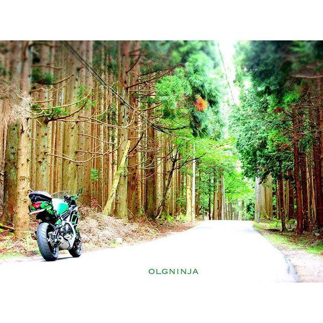 【olgninja】さんのInstagramの写真をピンしています。《知らない道  滋賀県から福井県までツーリングの筈が、  途中で気になる道を発見し冒険心が湧いてきたので、  ナビを無視して走って来ました。  つづく  ##滋賀#Shiga#滋賀県#近江#琵琶湖#Lake# #福井 #知らない道 #冒険 #ツーリング #Ninja400#ニンジャ400#ニンジャ#Ninja#Kawasaki#カワサキ#バイク#bike #happy#instagood#me#followme#photooftheday #instagood#love#me#follow#tbt#happy #杉#すぎ#スギ#林》