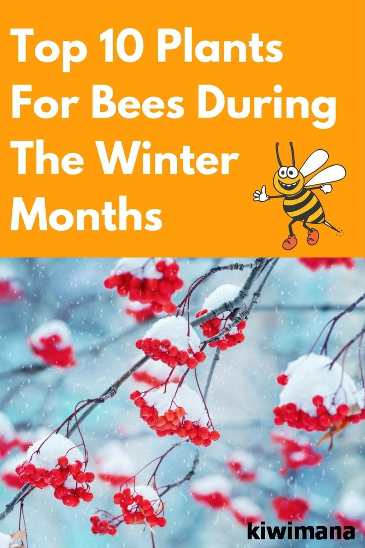 Winters are the months that come out to be a little hard to survive for anybody. Here are some ideas for plants that will help bees during the coldest season.