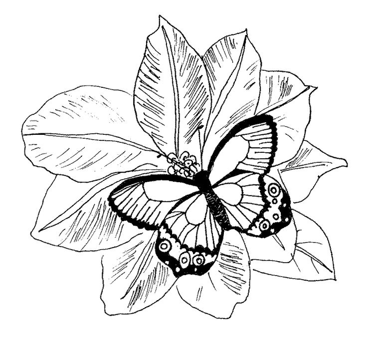 fall flower coloring pages - photo#36
