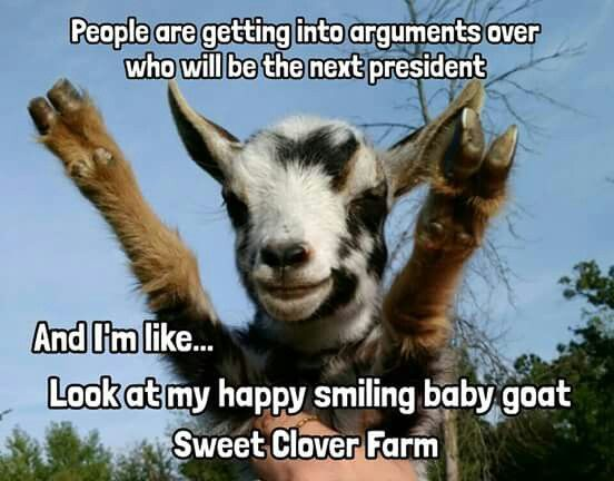 Quotes About Goats Unique 586 Best Goats Images On Pinterest  Goats Baby Goats And Dairy