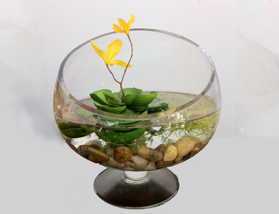 Carnivorous aquatic plant, I don't know if I could actually make this myself but someday in my spare time I may try. And I'd probably add a Betta Fish.