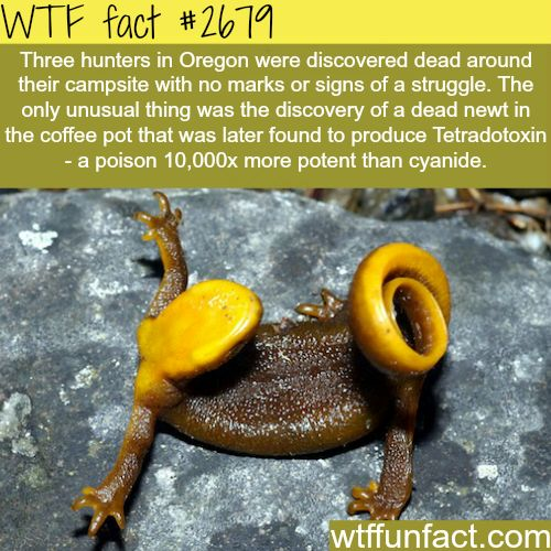 WTF fun facts... I live in Oregon, I will have to remember to check my coffee pot while camping.