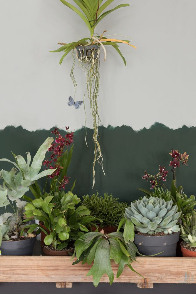 New romaticism is een trend waar de liefde voor planten for Indoor gardening trends