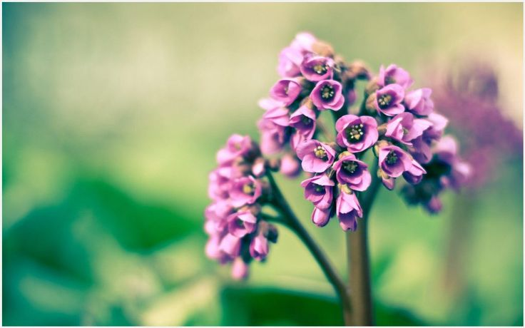 Tiny Flowers Wallpaper | mini flowers wallpaper, tiny flowers wallpaper, tiny pink flower wallpaper