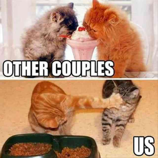 United States, Cat, Internet meme, Kitten, Image Meme: OTHER COUPLES US