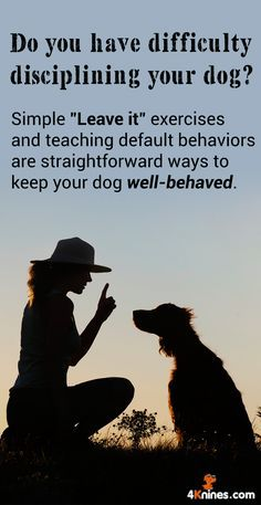 Dog Impulse Control Training provides simple steps to take for your dog to act more calmly like waiting before your dog sits before you give them something to eat. @KaufmannsPuppy
