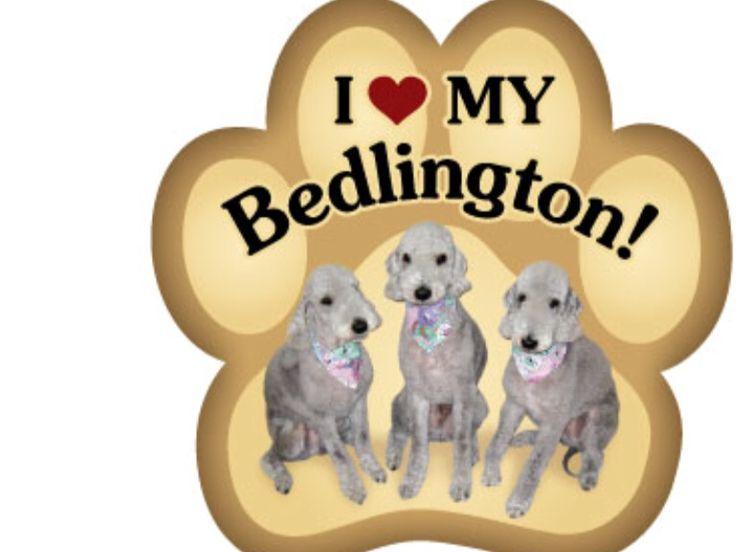37 Best Belgians My Favorite Dogs Images On Pinterest Belgian