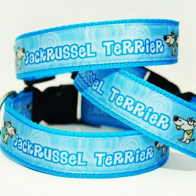 Obojky od Blackberry | Colars by Blackberry #jakcrusselterrier #jrt #jack #russel #terrier #blue #collars #set #three #design #blackberry #obojky #modra #tri