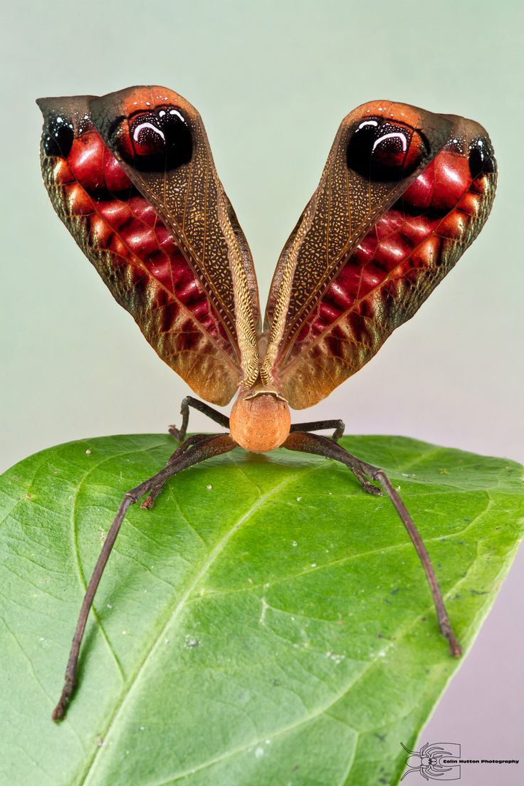 best bugs images on pinterest butterflies bees and bugs