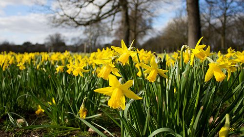 Spring Colours by russelljsmith, via Flickr