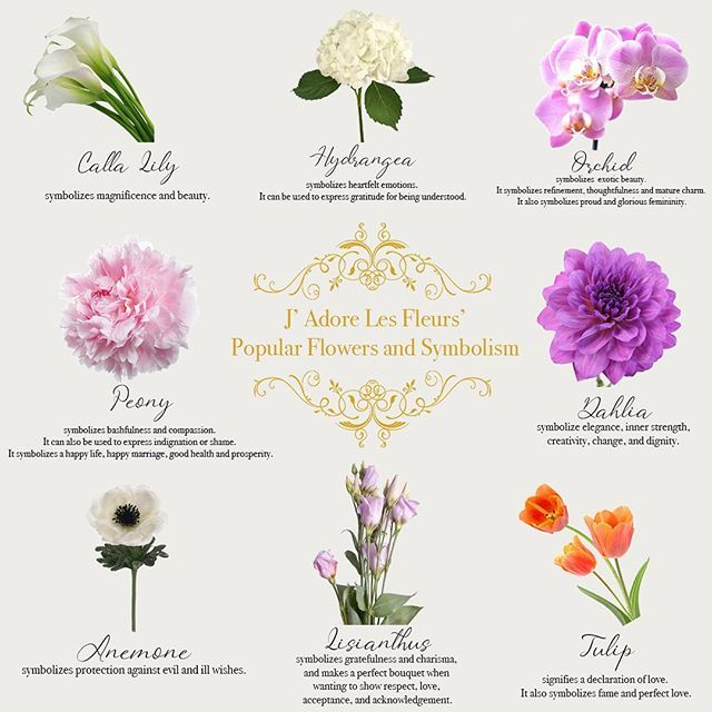 The Symbolic Language Of Flowers Has Been Recognized For Centuries All Flowers Have Their Own Significant M In 2020 Most Popular Flowers Popular Flowers Peony Meaning