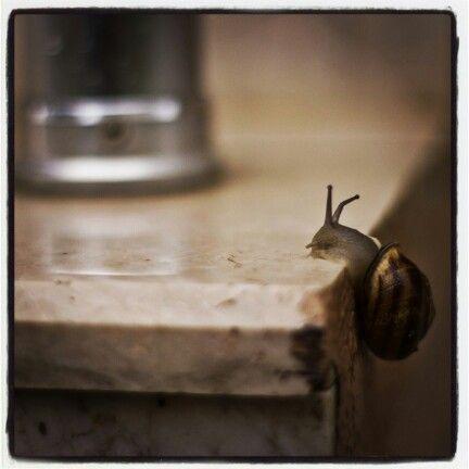 #little #snail #rock #climbing