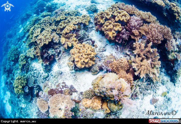 Coral in Raja Ampat - Indonesia