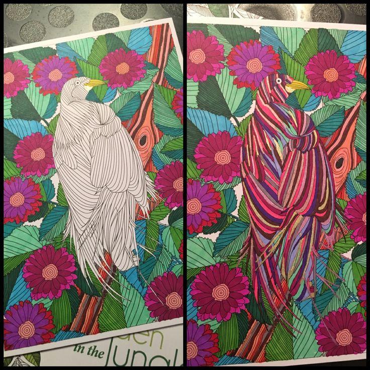 "Birdies and sharpies ""Hidden in a jungle"""