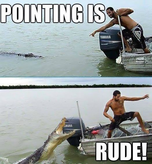 I found this way too funny - this is what I think of every time I see people getting too close to dangerous animals...