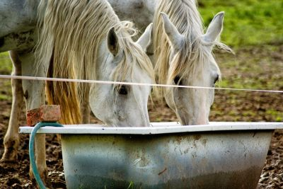 Slik vil hesten ha vannet sitt. This is how horses wants their drinking water.