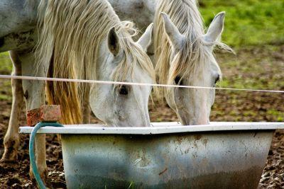 Slik vil hesten ha vannet sitt . -Lykkedyra -