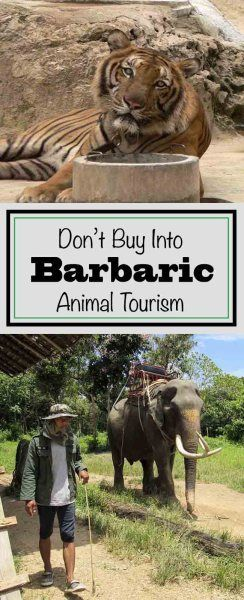 Don't Buy Into Barbaric Animal Tourism! - Trippin' Turpins