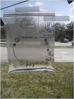 water cycle - baggie in window