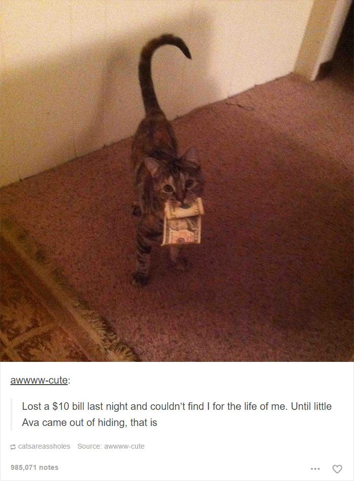 Best Amusing Animal Pictures Images On Pinterest Funny Cats - 20 cat posts on tumblr that are impossible not to laugh at