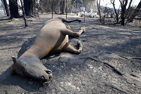 Horse caught in a bush fire.