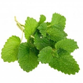 Health Benefits-Lemon Balm. Calms anxiety and also used to ease symptoms of attention defecit disorder.