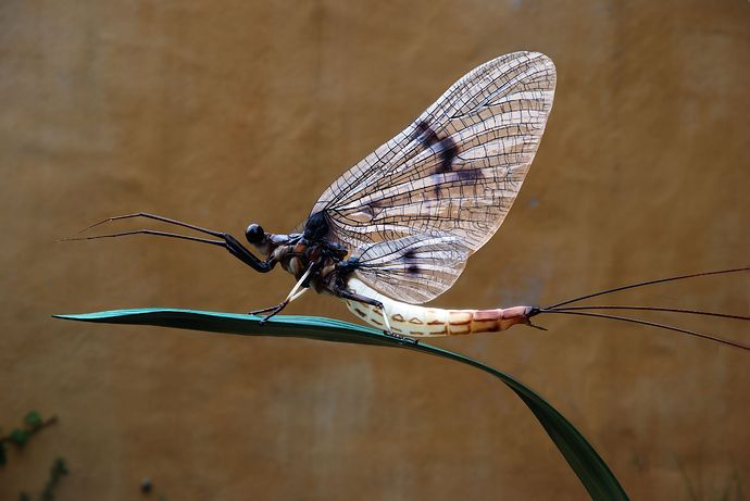 Klaus Leitl is an Austrian artist who makes insects. Incredibly lifelike insects such as the Mayfly shown above. He posted some examples on the Formlabs forums, and they quickly took notice. They'v...