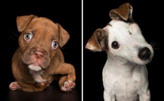 Fotografo cattura la bellezza di cani con disabilità in commoventi immagini