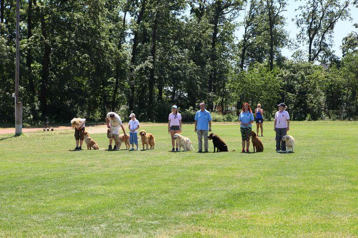 Kutyavarázs - dog training