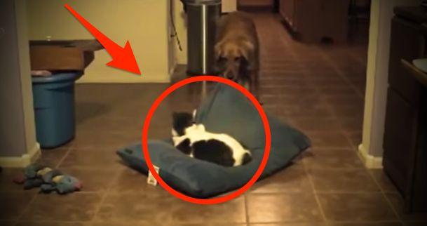 A vicces ok, amiért a kutyák utálják a macskákat…