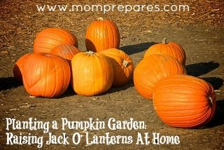 Plant your pumpkin garden at home and raise your own Jack o' lanterns! http://www.momprepares.com/2012/10/26/planting-a-pumpkin-garden-raising-jack-o-lanterns-at-home/    #nowthatsclever!