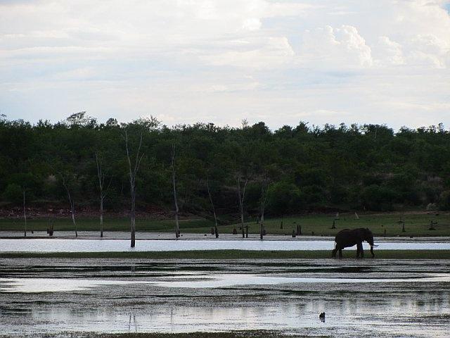 Elephant on Lake Kariba, Zimababwe, Dec 2011.