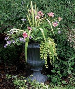 One pot, four seasons. 10 Plants for Year-round Containers... These survivors can stay in pots for years, lending consistency to your designs. Yucca and bergenia are the core plants in this container, shining in summer and fall.