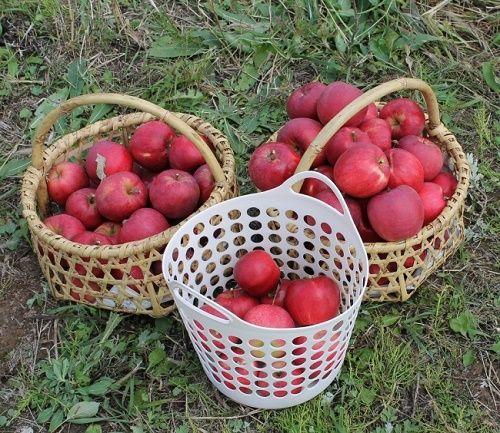 映画のモデルとなった奇跡のリンゴが当たる自然栽培農法で作られた野菜の定期便募集がスタート